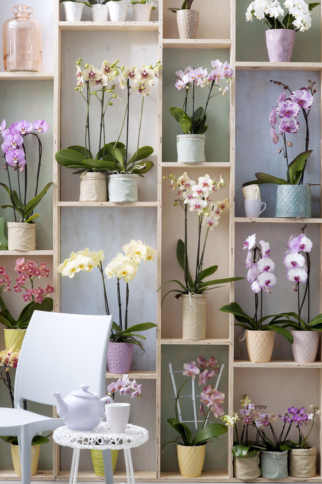 Ma Petite Jardinerie: le spécialiste de la vente de plantes et d'accessoires en ligne!