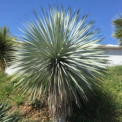 Les Cactées de Saint-Jean: une production durable au service des cactus, plantes succulentes et exotiques