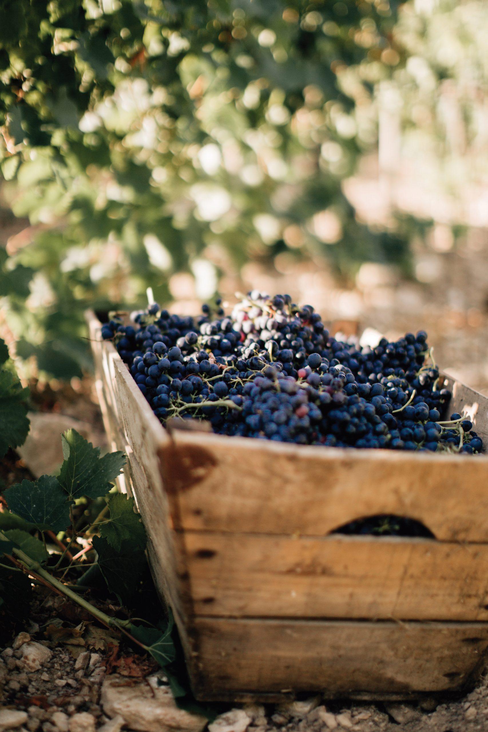 Zoom sur les Vins Château Isolette