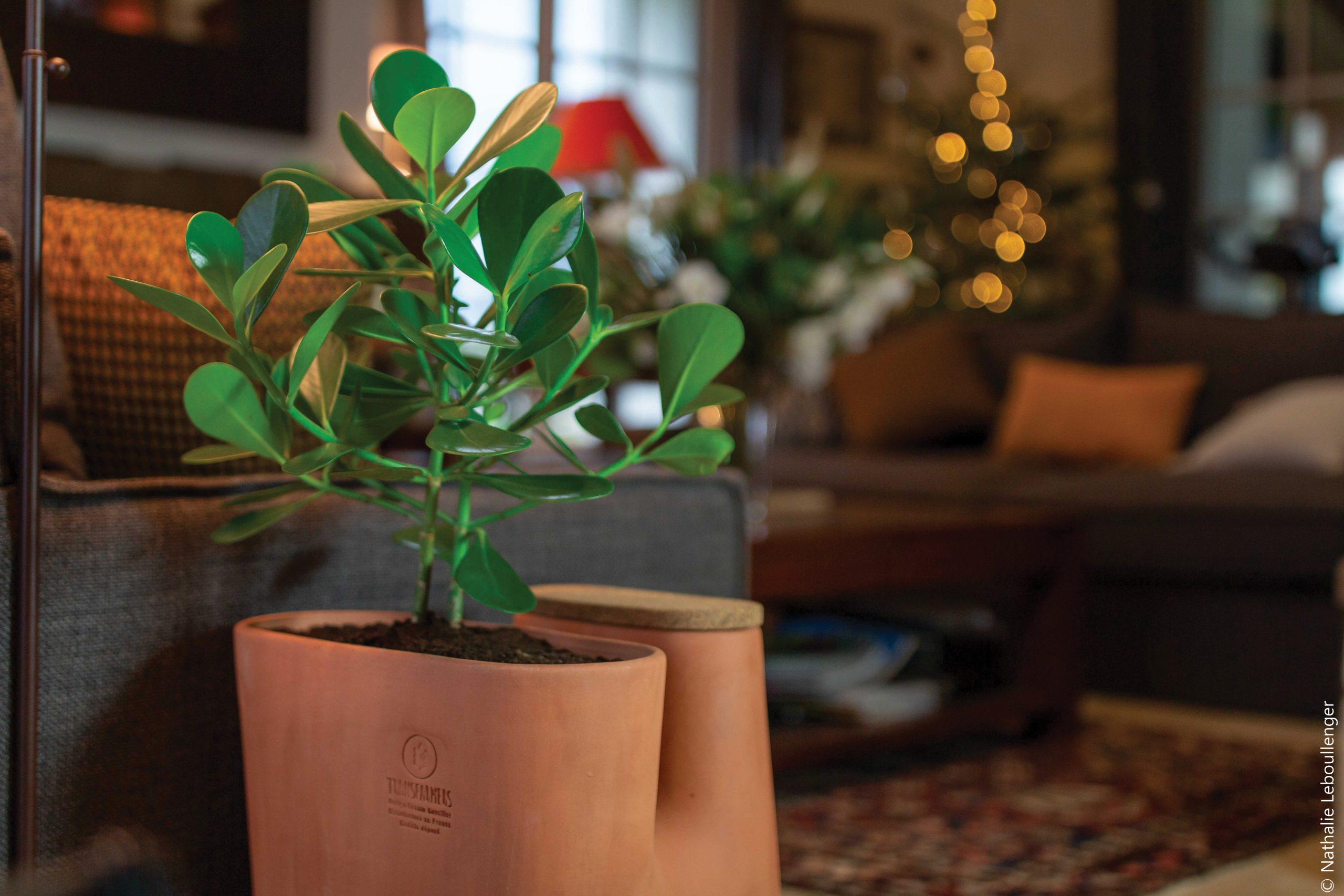 Les Transfarmers, ou le pot de fleurs composteur design et écologique