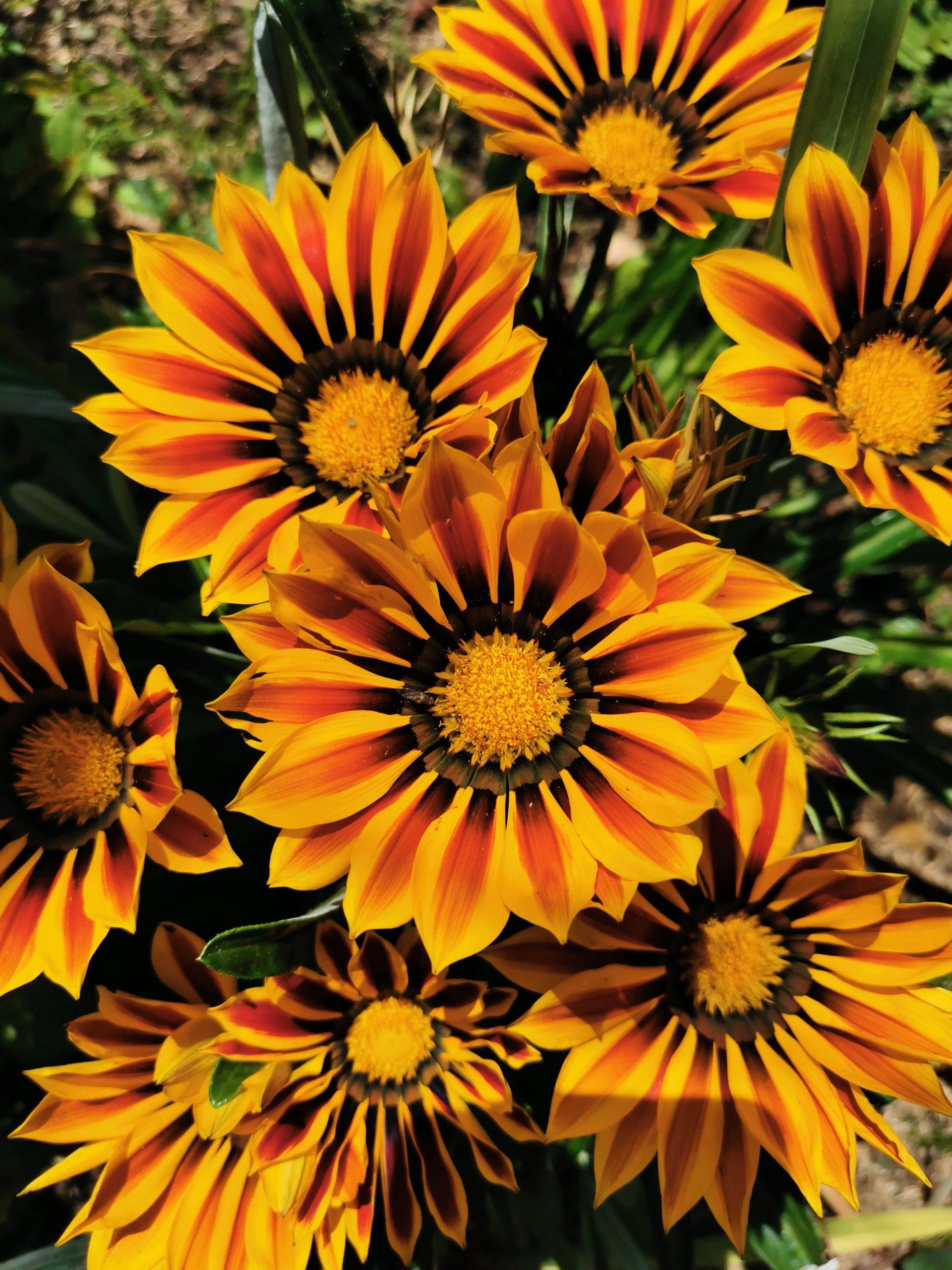 Bergamotte : Un code magique pour fleurir Mamie le dimanche 7 mars !